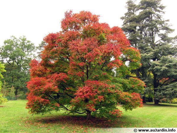 Poèmes sur l'automne