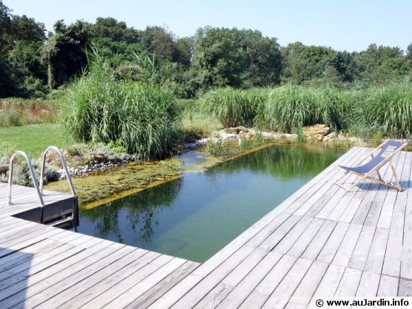 La baignade naturelle for Plan piscine naturelle