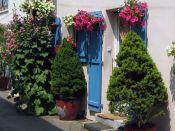 Plantes du balcon et de la terrasse