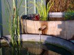 Un bassin avec des tonneaux