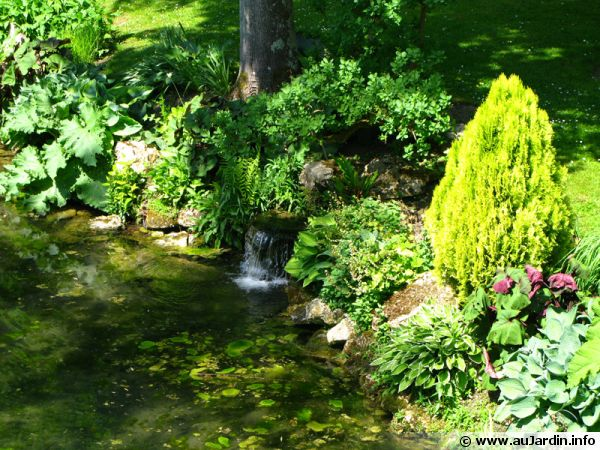 Plantes du bassin