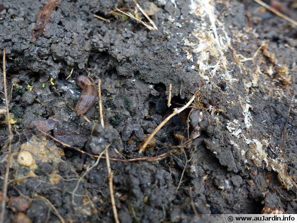 La biologie du sol est composé de racines, de divers petits animaux, des champignons, etc qui contribuent tous à sa regénération