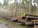 Les labels bois