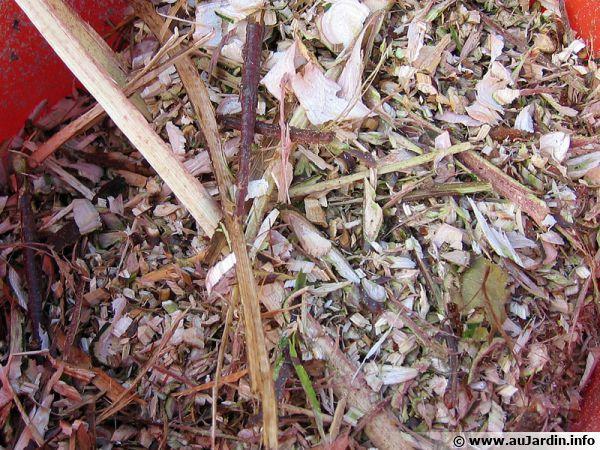 Végétaux broyés à la sortie d'un broyeur