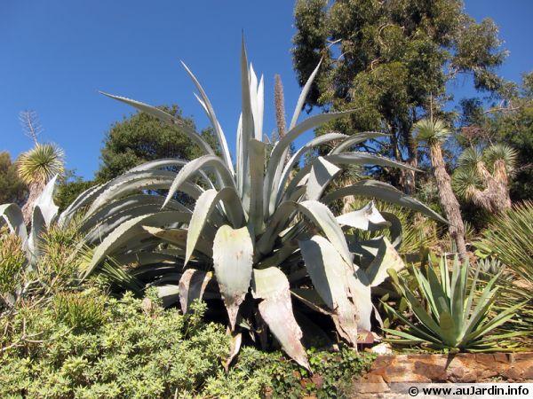 Cactus et plantes grasses for Plante grasse exterieur rustique