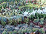 10 cactus faciles de culture