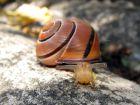 Trucs contre les limaces et les escargots