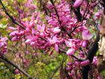 Arbres et arbustes du printemps