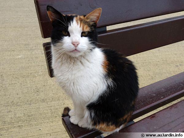 Un chat de gouttière se contente d'un brossage régulier