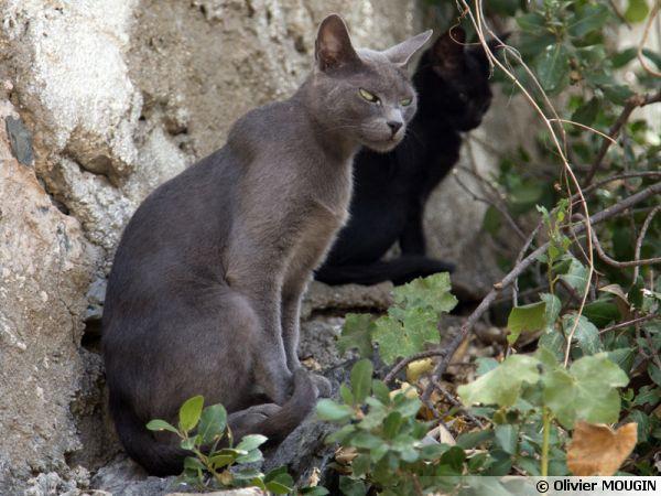 Des chats en observation
