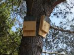 Aidez les chauves-souris en leur proposant un abri