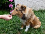 Quelles friandises pour votre chien?