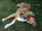 Traiter et prévenir les puces et les tiques chez le chien