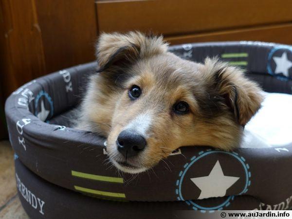 Un chiot de 4 mois a besoin d'apprentissage pour devenir un chien adulte