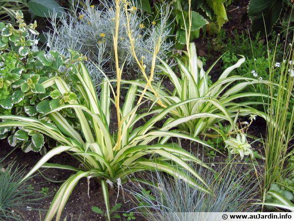 Le chlorophytum est la plante qui absorbe le mieux le monoxyde de carbone