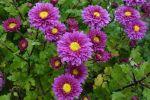 Les fleurs d'automne