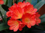 10 plantes d'intérieur fleuries faciles