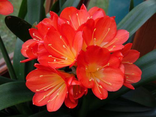 10 plantes d 39 int rieur fleuries faciles - Begonia d interieur arrosage ...