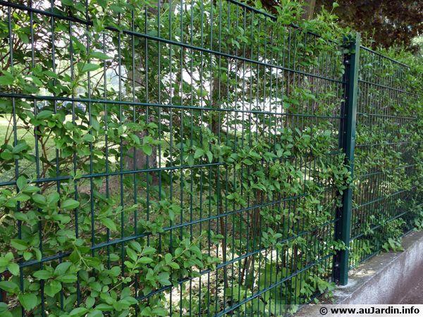 Clôtures rigides commençant à être envahi par le végétal
