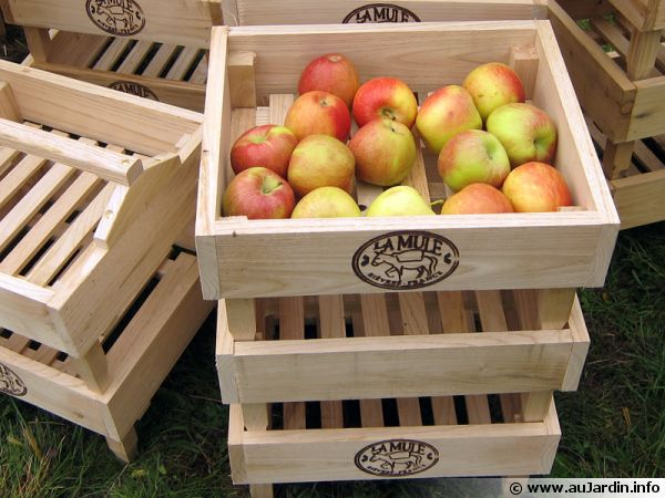 Des cagettes aérées pour conserver les pommes et les poires