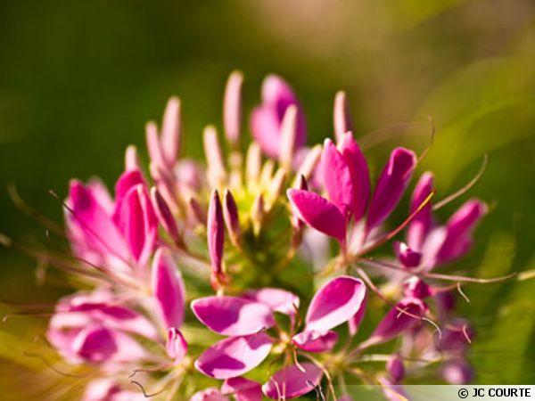 Les plantes, une source d'inspiration
