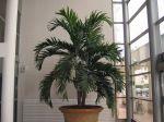 La culture des plantes d'intérieur en hiver