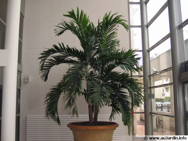 La culture des plantes d 39 int rieur en hiver - Plante d interieur photo ...