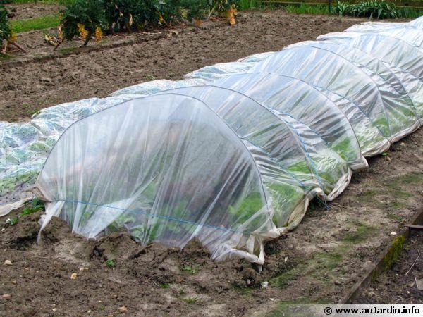 Les diverses méthodes de semis précoces