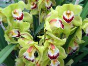 Orchidées & broméliacées