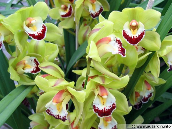 Orchid�es & brom�liac�es
