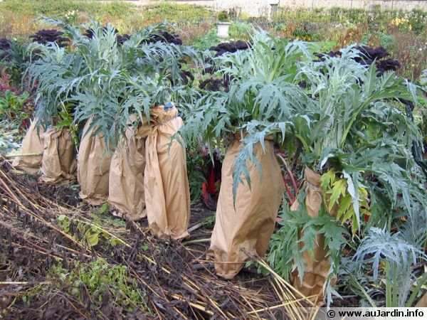 Le blanchiment des légumes