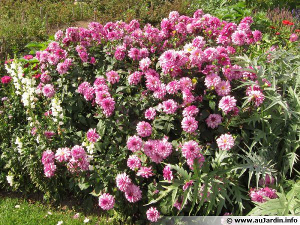 Plantation des bulbes d'été