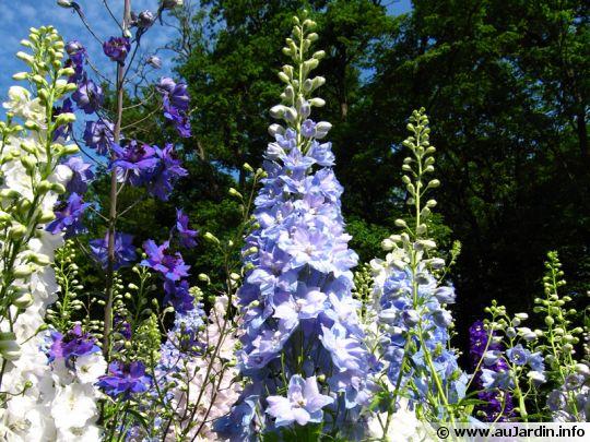 Les fleurs en épis
