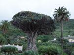 La flore de Tenerife