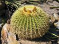 Le rempotage des cactus et des plantes grasses