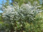 Les plantes au service de la parfumerie