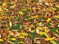 Ramasser et broyer les feuilles mortes en un tour de main