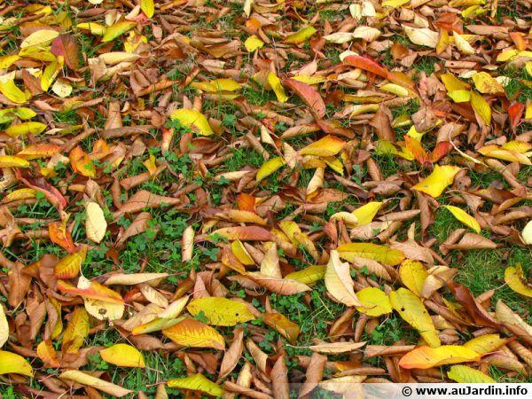 Les feuilles mortes recouvrent la pelouse à l'automne