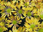 Fleurs d'automne, une arrière saison pouvant être également très gaie !