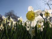 Fleurs annuelles et bulbes du printemps