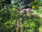 FLORALPINA, massif de fleurs alpines