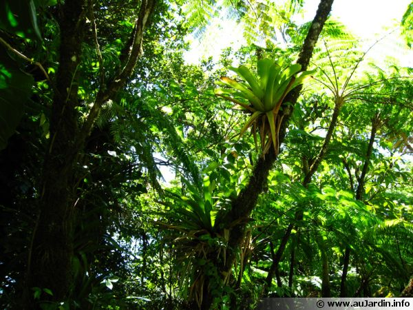 Forêt de type tropicale aux Caraïbes