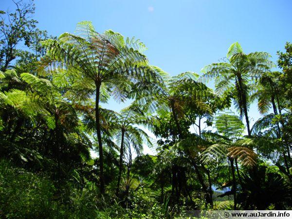 La diversité végétale est importante dans la forêt tropicale