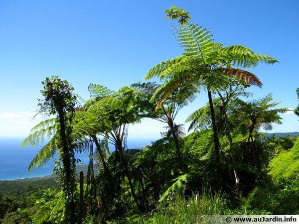 Des fougères tropicales au milieu de la forêt