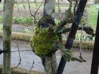 Le traitement hivernal des arbres fruitiers