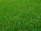 Régénérer la pelouse