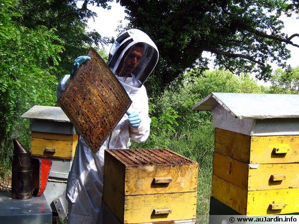 Grégoire Martin, apiculteur (suite)