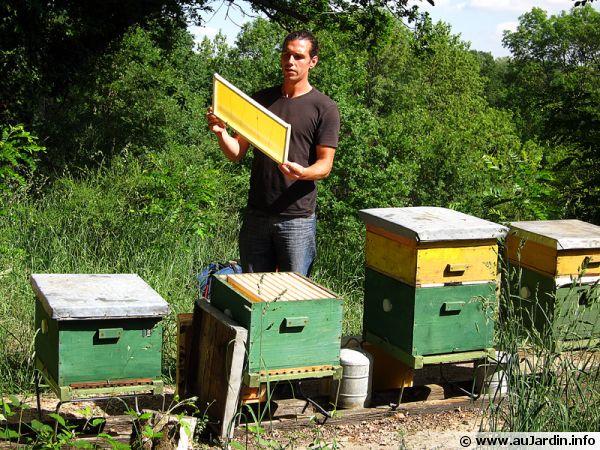 Grégoire MARTIN, apiculteur à Palaiseau
