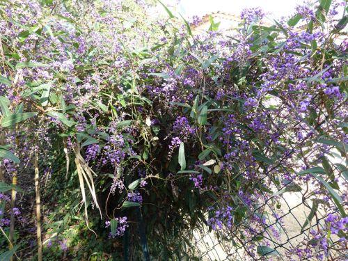 Occulter avec des fleurs - Cacher son balcon ...