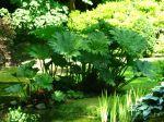 Des plantes pour un sol gorgé d'eau